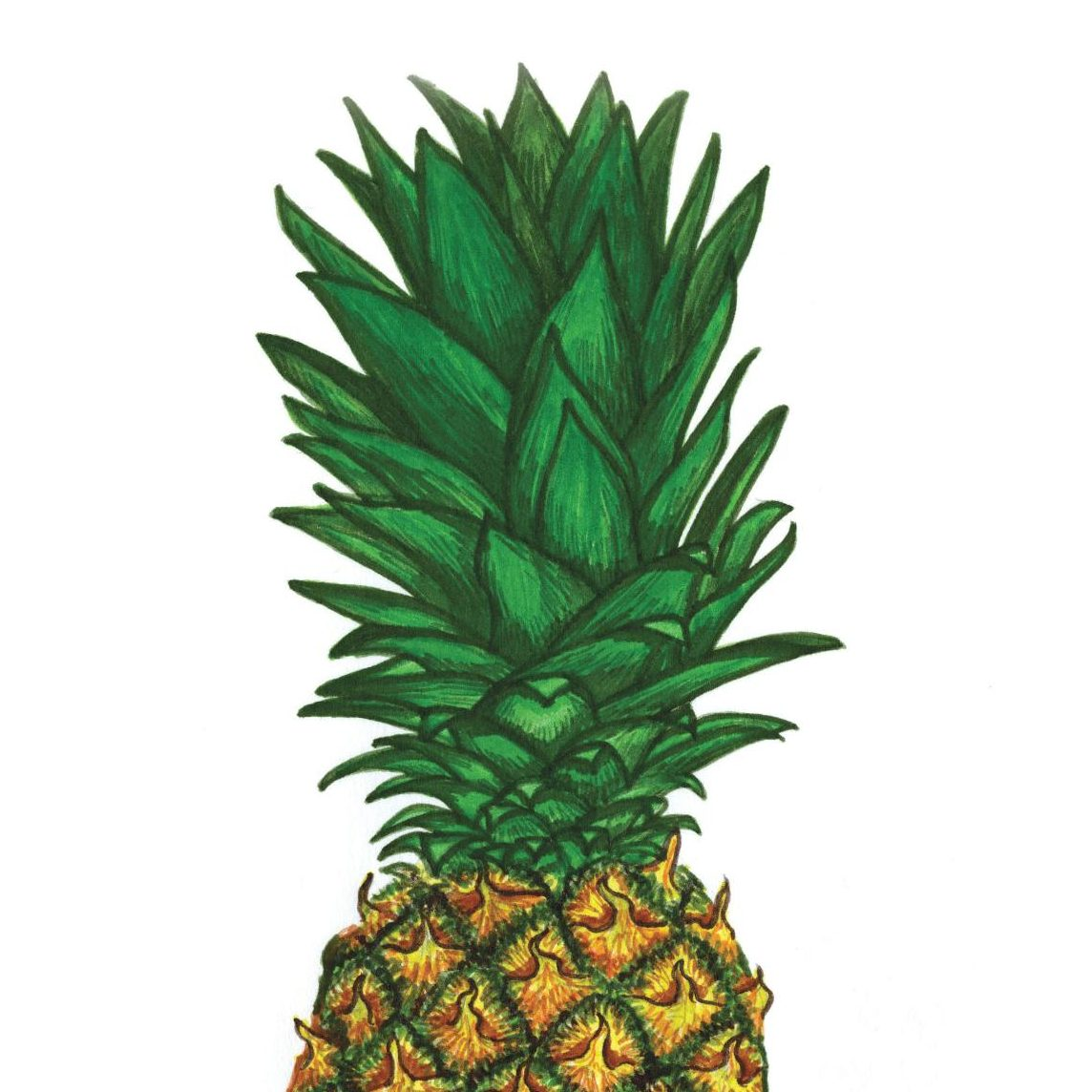 Pineapple - Reflections by Megan