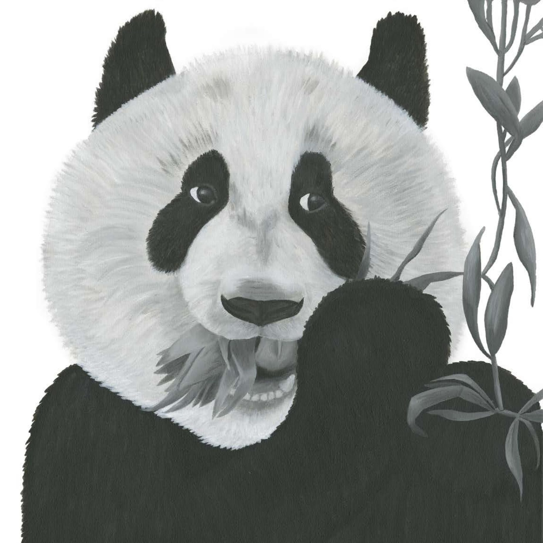 Perry the Panda - Reflections by Megan