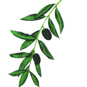 Olive Branch Reflections by Megan